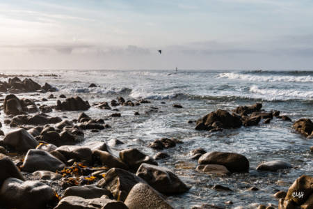 Goéland au-dessus de la marée