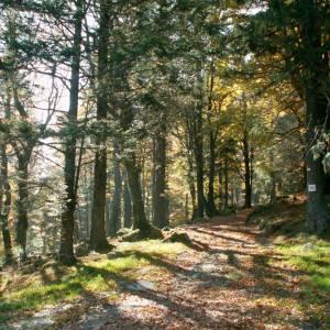Vosges3