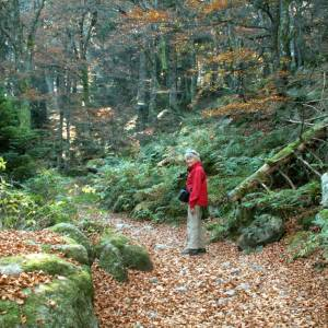 Vosges5