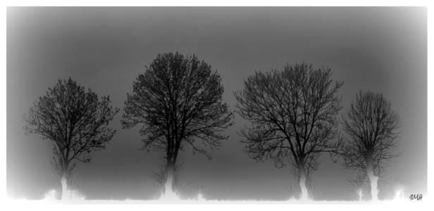 Sentinelles dans la brume