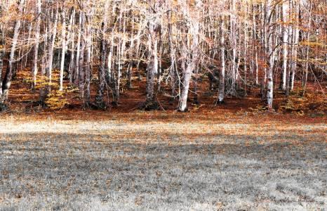 Lisière de hêtraie en automne