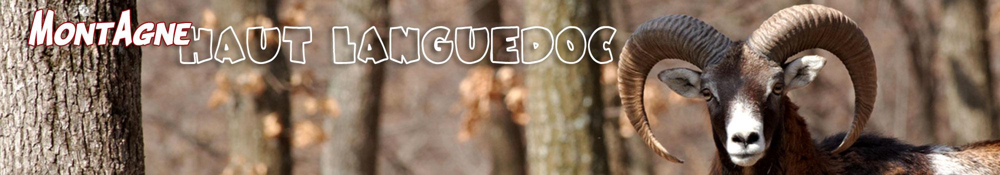 montagne Haut Languedoc. Le mouflon