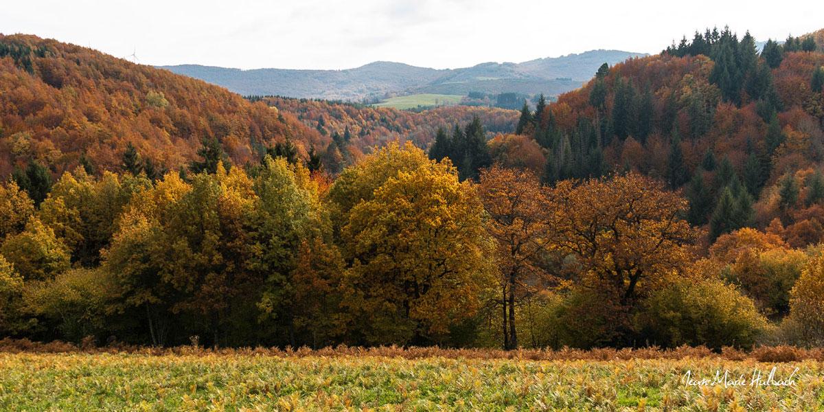 Montagne du Haut Languedoc. Automne