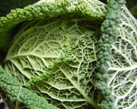 Recettes de santé par les plantes. Chou vert
