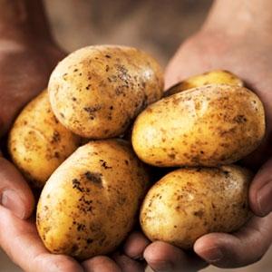 Cuisine traditionnelle de France. Recettes de pommes de terre
