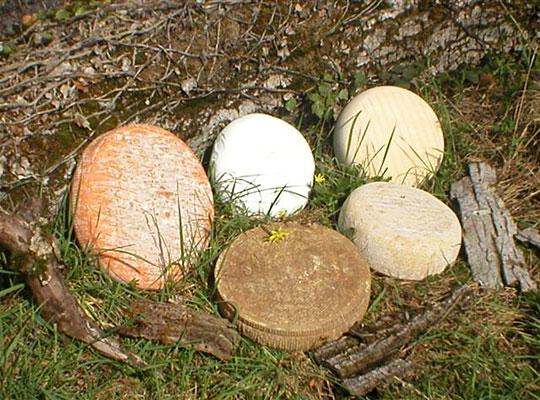 Produits du Haut Languedoc. Fromages des monts de Lacaune