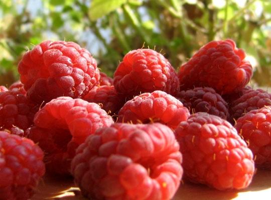 Recettes de santé par les plantes. Framboise