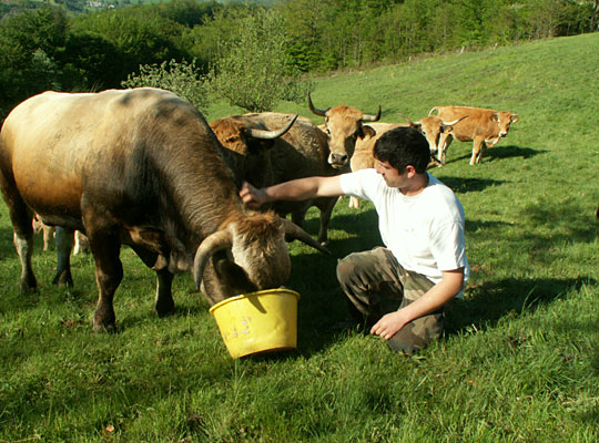 Eric Grousset boucher-charcutier La Salvetat-sur-Agoût. Viandes d'élevages régionaux