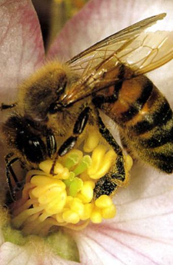 miel-reine360x440