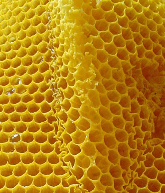 Miel. Rayon de miel