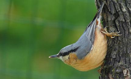 oiseausittelletorchepot