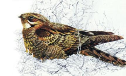 oiseauxengoulevent370x180