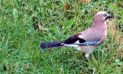 oiseauxgeai370x180