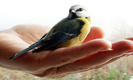 oiseauxmesangecharbonniere3