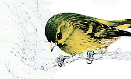 oiseauxtarinaulnes370x180