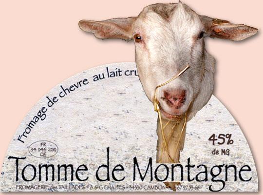 Produits du Haut Languedoc. Fromages de chèvre